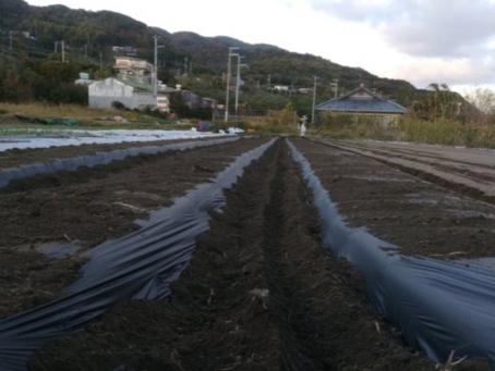 本日のお野菜セット(2019/11/29)
