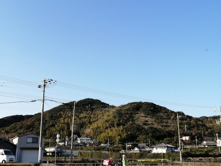 本日のお野菜セット(2020/11/13)