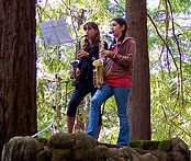 _saxes on a redwood tree.jpg