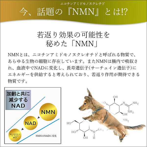 NMNLP003.jpg
