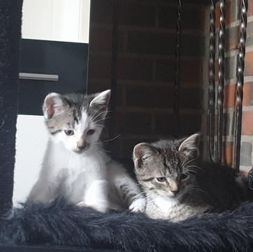 Tilde & Prinz