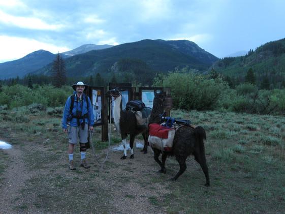 Scott with Llamas