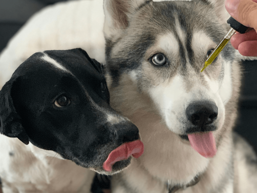 CBD Oil For Dogs and Cats By Jon Vought
