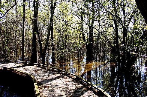 Black bayou pic.jpeg