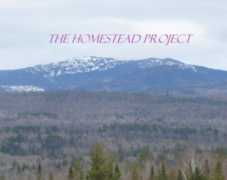 THe Homestead Project- Peter Kling