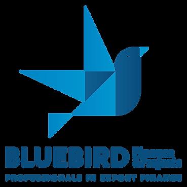 BlueBird-Finance-&-Projects-2.png