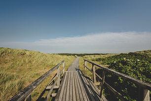 Canva - Wooden Boardwalk in Midst of Gre