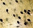tadpoles.jpg