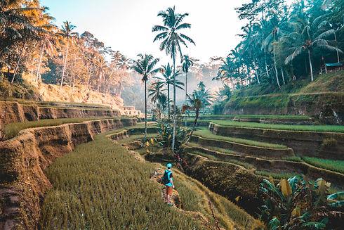 Traveler_edited.jpg