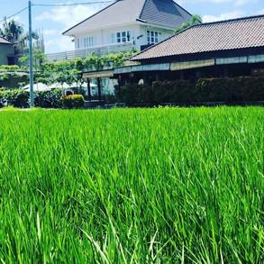 ricerestaurant.jpg