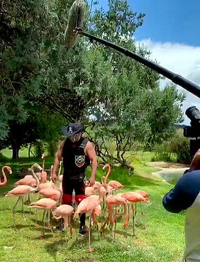 RIYE TEXANO FLAMINGO.jpg