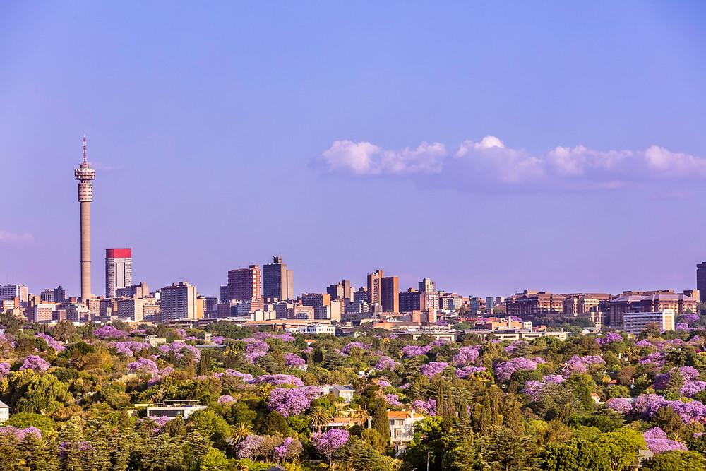 Johannesburg skyline - Jacaranda's