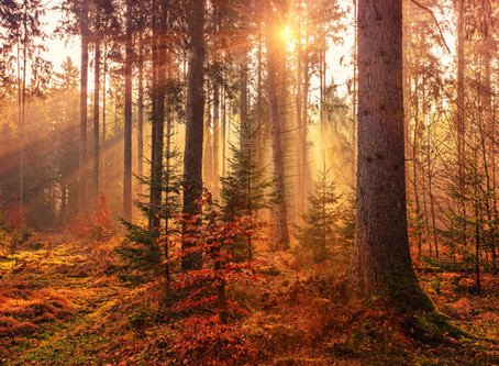 The Energy of Fall's Presence