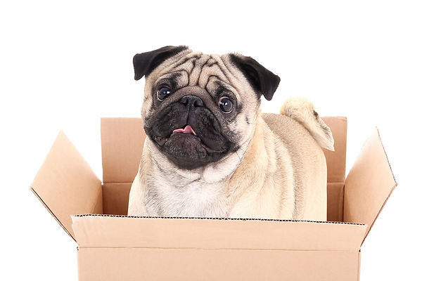 Pet friendly movers - Denver Movers