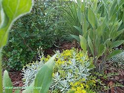 Green Plants in a garden, Daisy, seedum, hedge leaves on mulch