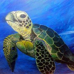 Turtle in Awareness