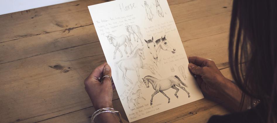 Horse Study 2nd 1.jpg