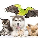 veterinary-specialties.jpg