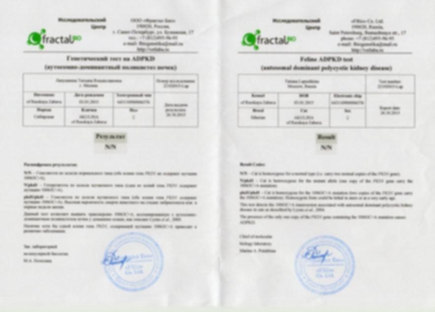 26.10.2015 - АКУЛИНА РЗ.PKD DNA-test