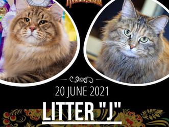 20.06.2021 - В питомнике родились котята!!!