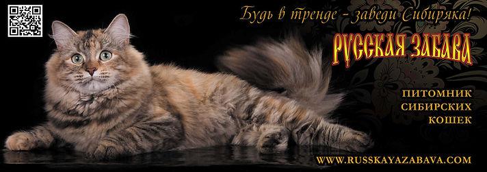 Питомник сибирских кошек РУССКАЯ ЗАБАВА