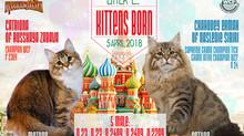 05.04.2018 - В питомнике родились котята!!!