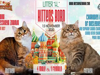 15.11.2020 - В питомнике родились котята!!!
