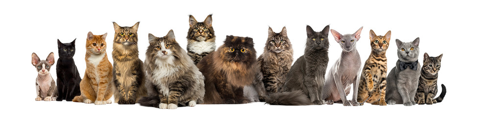 bigstock-Many-Cats-sitting-in-a-row-is-2