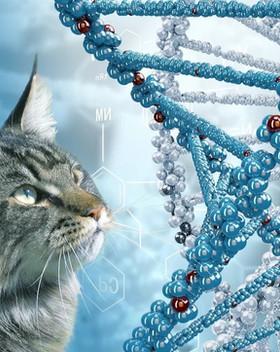 генетика кошек