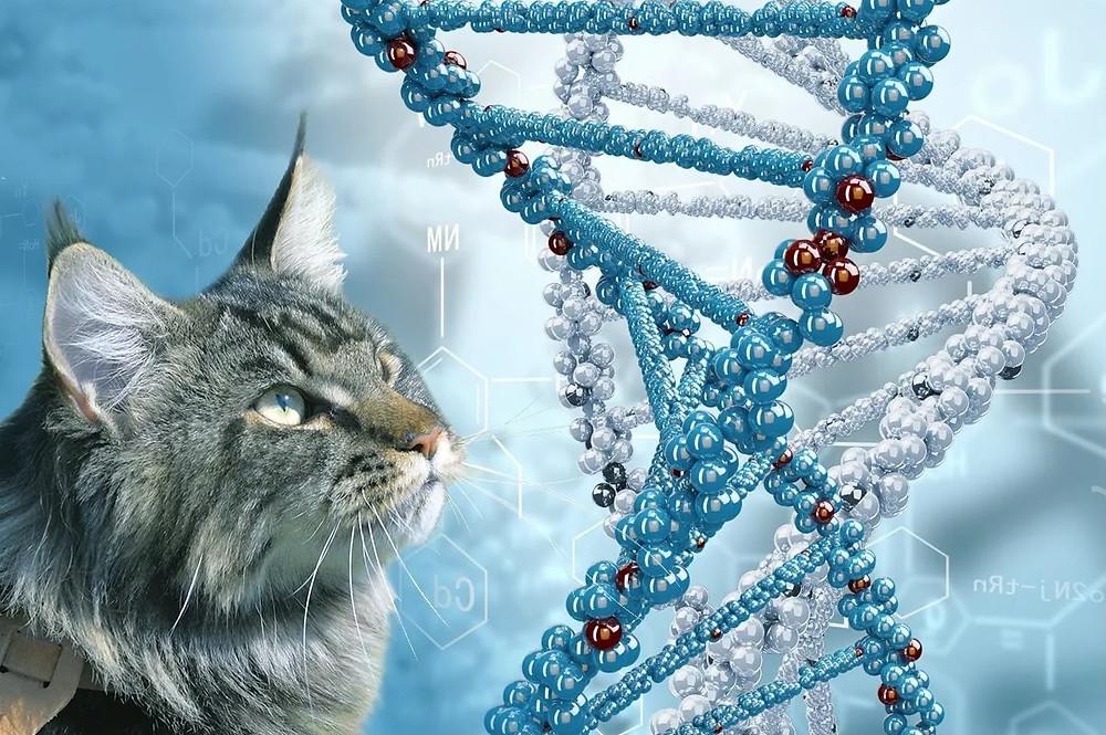 школа фелинологов, breeder-school, школа заводчика, семинары, курсы, зоомир, генетика