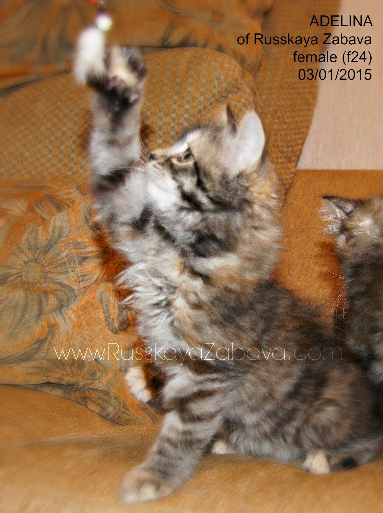 АДЕЛИНА РУССКАЯ ЗАБАВА кошка, f24 2