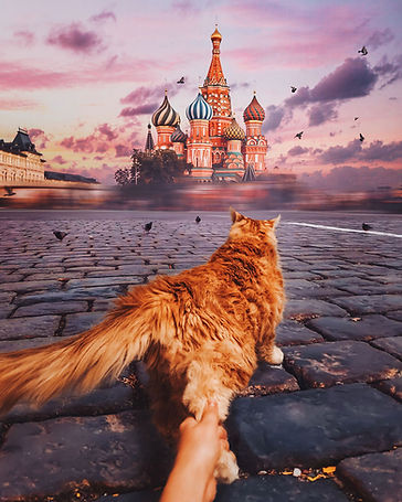 4redcat.jpg