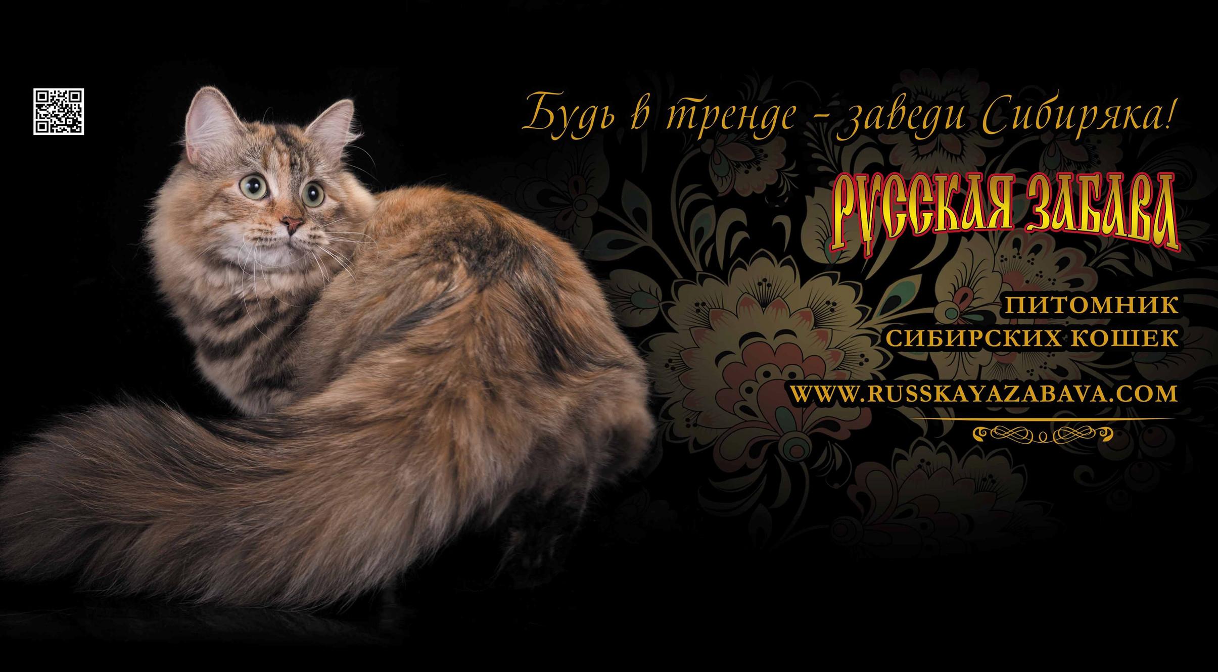 клубы сибирских кошек москва