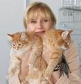 рыжие котята.jpg