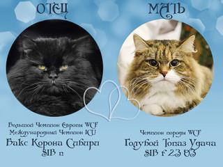 29.01.2016 - В питомнике родились котята!!!