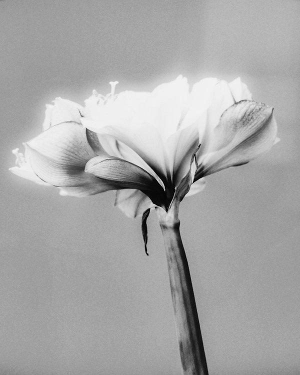 Flower 05.jpg