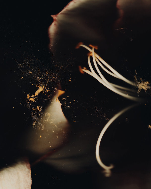 Flower 08.jpg