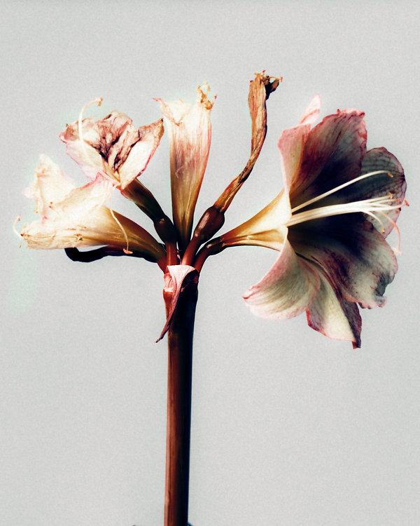 Flower 09.jpg