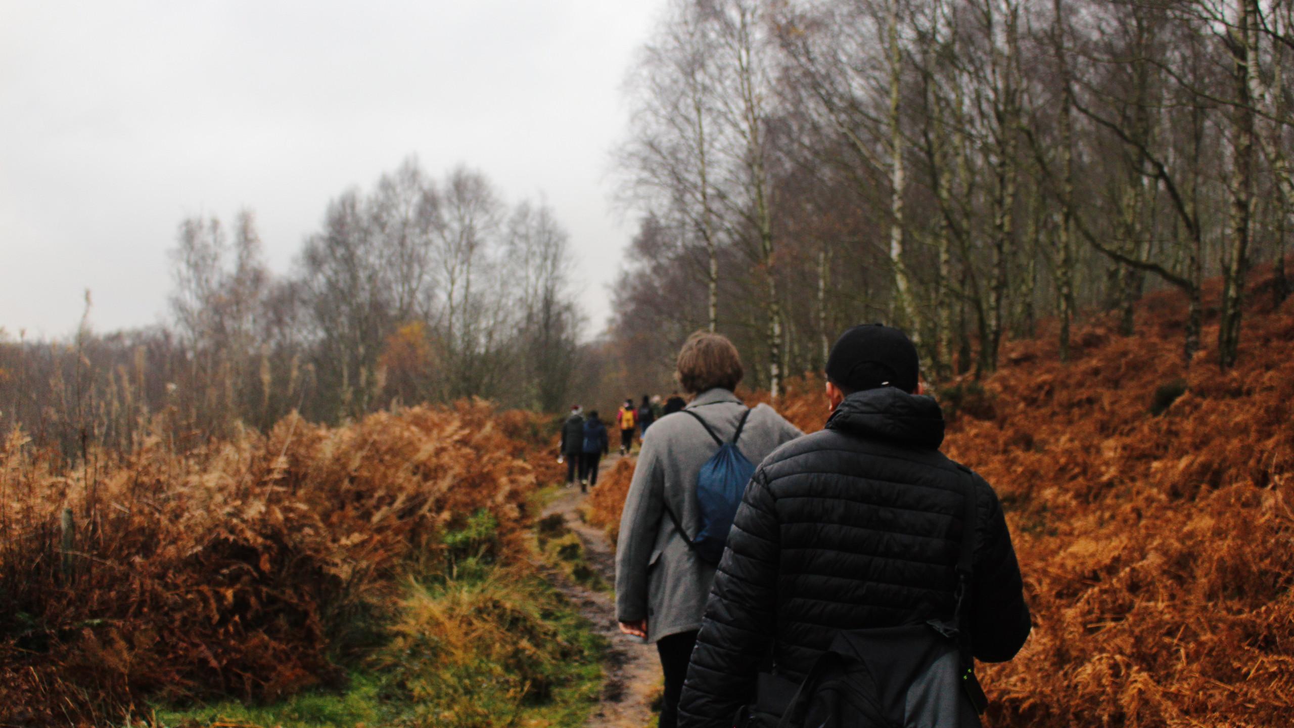 Walking through Ferns