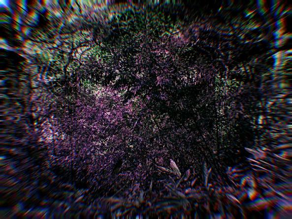 RUINS (through the eyes of Acteon)