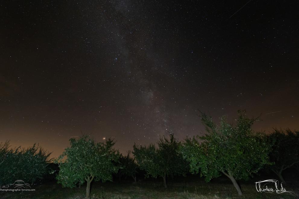 Les mirabelliers et la Voie Lactée