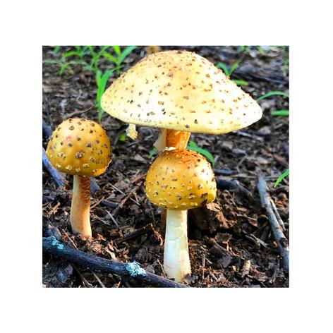 1- Mushrooms 3.jpg