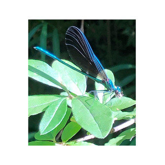 1- Dragonfly.jpg