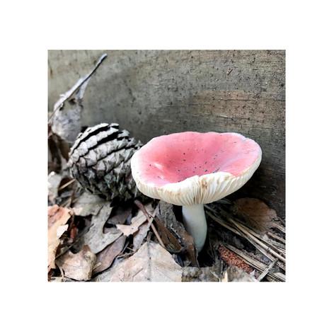 1- Mushroom Pinecone.jpg