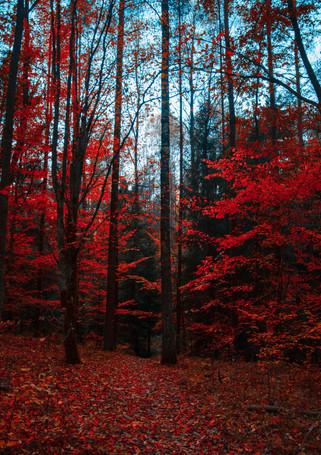 red-trees-1547813.jpg
