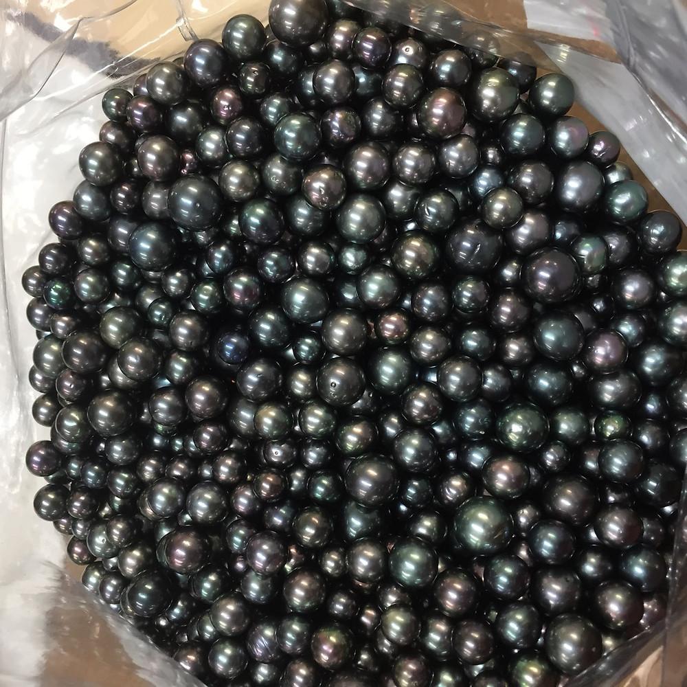 宇土真珠のタヒチパール