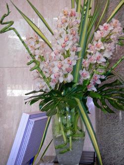 Cymbidium orchids design