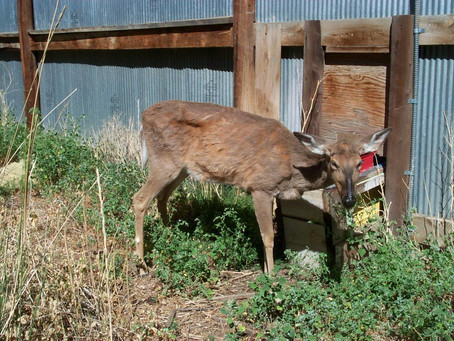 DNR Encourages Hunters to Take Part in CWD Sampling