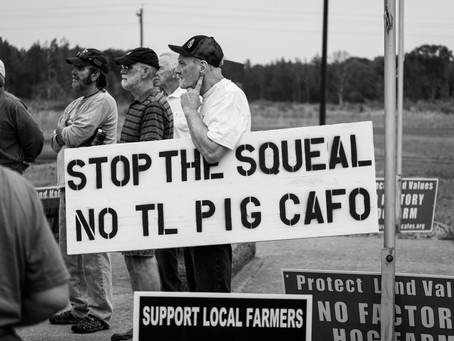 Wisconsin DNR Rejects Initial Hog CAFO Application