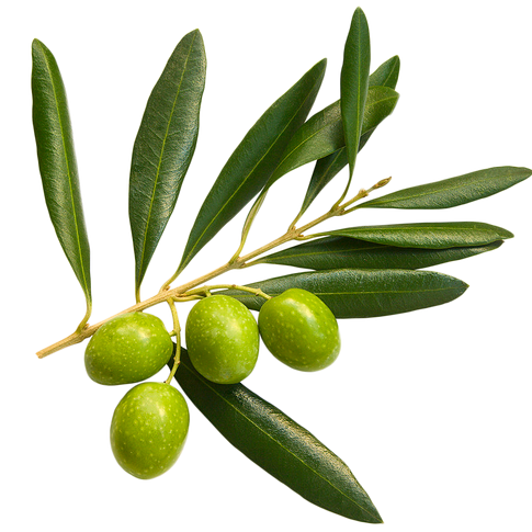 Calabrese Olive Oil